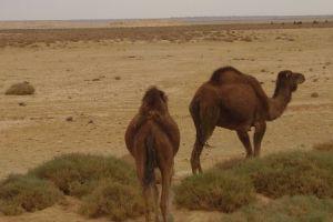 Mauretania - poradnik zwiedzania