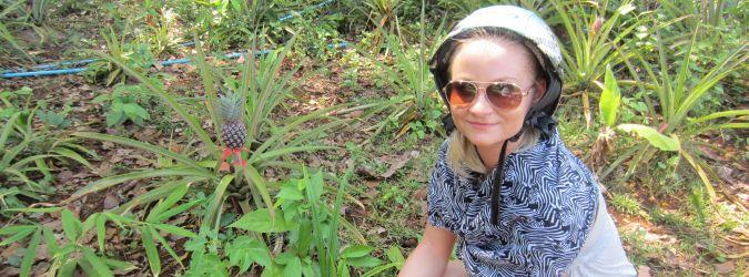 ananasy w Laosie